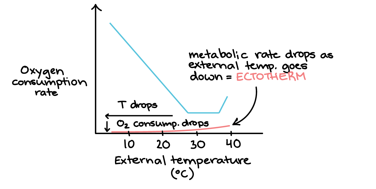 Temperature Regulation Strategies Article Khan Academy