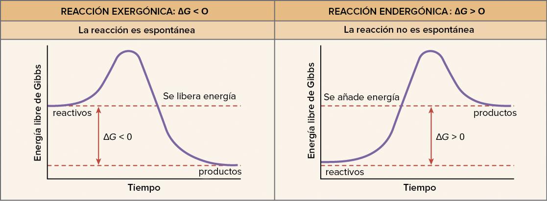 Energía libre (artículo) | Energía y enzimas | Khan Academy