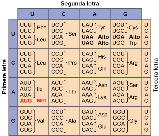 Resultado de imagen para codigo genetico