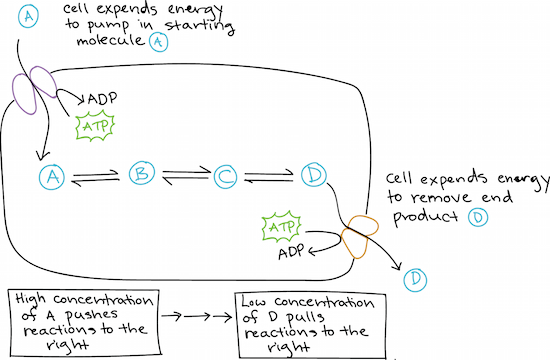 Free energy (article)   Energy and enzymes   Khan Academy