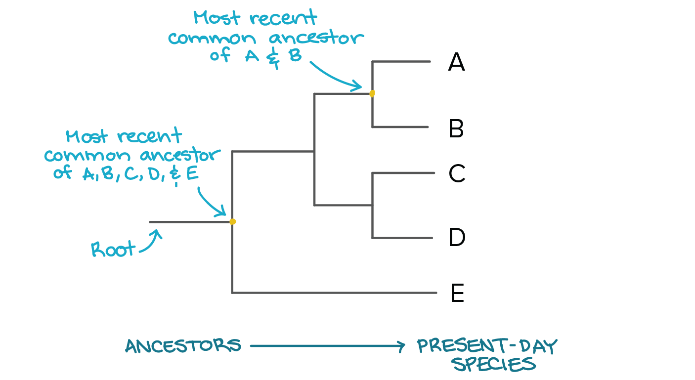 Following Table Represents The Wiring Connections That Worked For Me Phylogenetic Trees Evolutionary Tree Article Khan Academy Image Modified From Taxonomy And Phylogeny Figure 2 By Robert Bear Et Al Cc 40