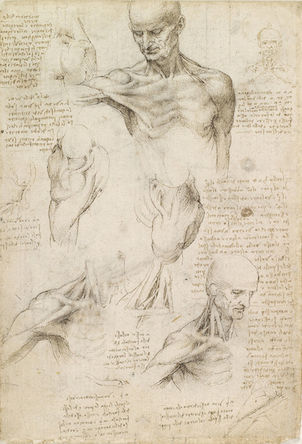 Leonardo da Vinci, Superficial anatomy of the shoulder and neck, c. 1510, pen and ink over black chalk, 29.2 x 19.8 cm (Royal Collection trust, UK)