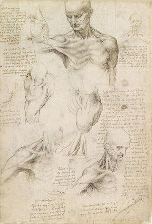 Leonardo da Vinci, Superficial anatomy of the shoulder and neck, c. 1510, pen and ink over black chalk, 29.2 x 19.8 cm (Royal Collection trust, UK)