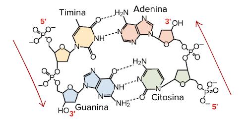 El ADN como material genético   Biología   Ciencia   Khan Academy