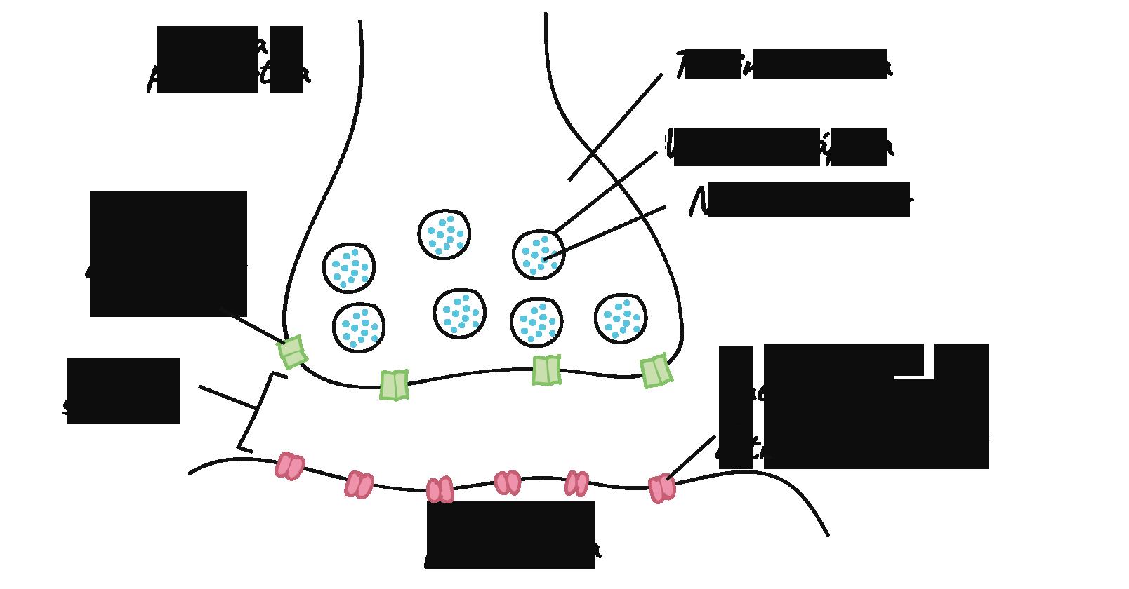 Anatomía de una neurona (video) | Khan Academy