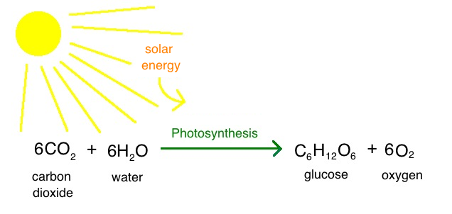 Intro to photosynthesis article khan academy intro to photosynthesis ccuart Gallery