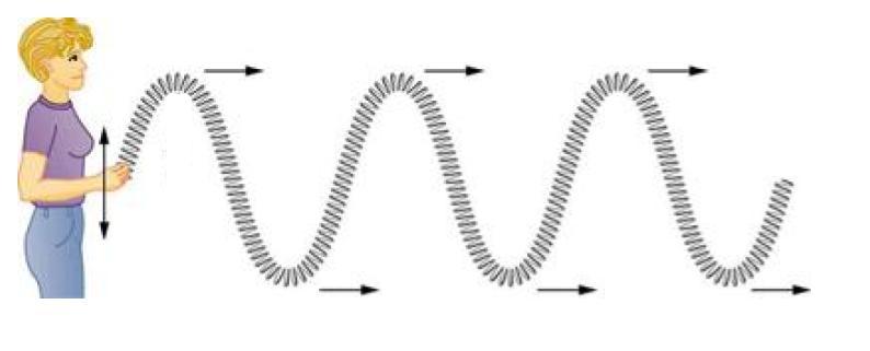 Transverse and longitudinal waves review (article)   Khan Academy