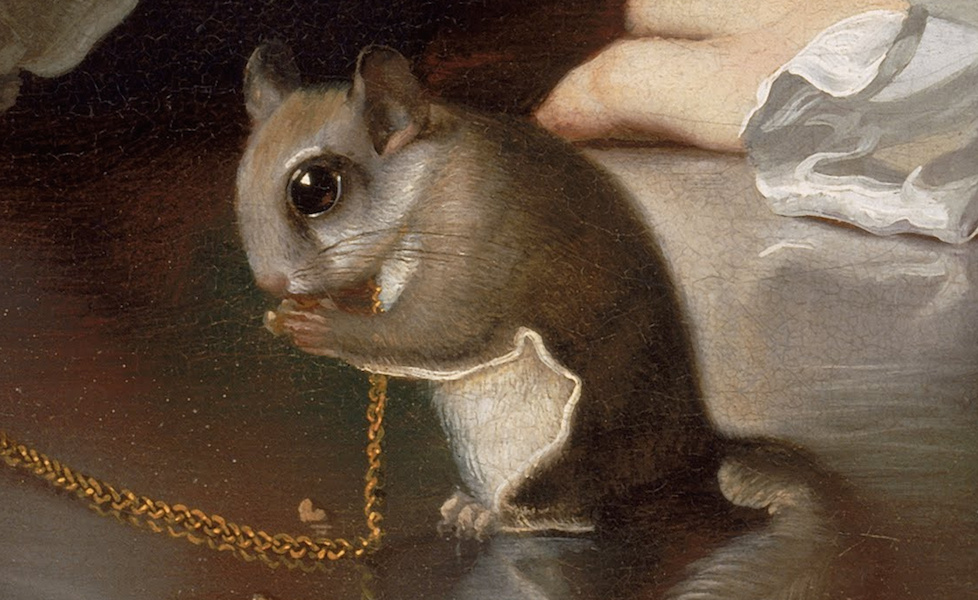 Squirrel (detail), John Singleton Copley, A Boy with a Flying Squirrel (Henry Pelham), 1765, oil on canvas, 77.15 x 63.82 cm (Museum of Fine Arts, Boston)