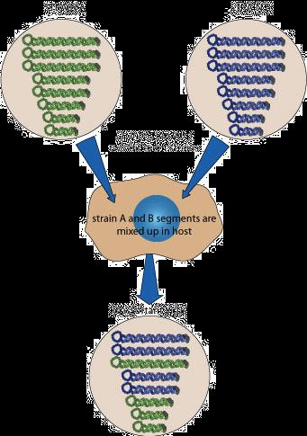 Bacteriophages Article Viruses Khan Academy