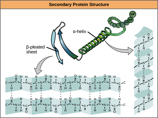 Introduction to Protein Structure  pdf