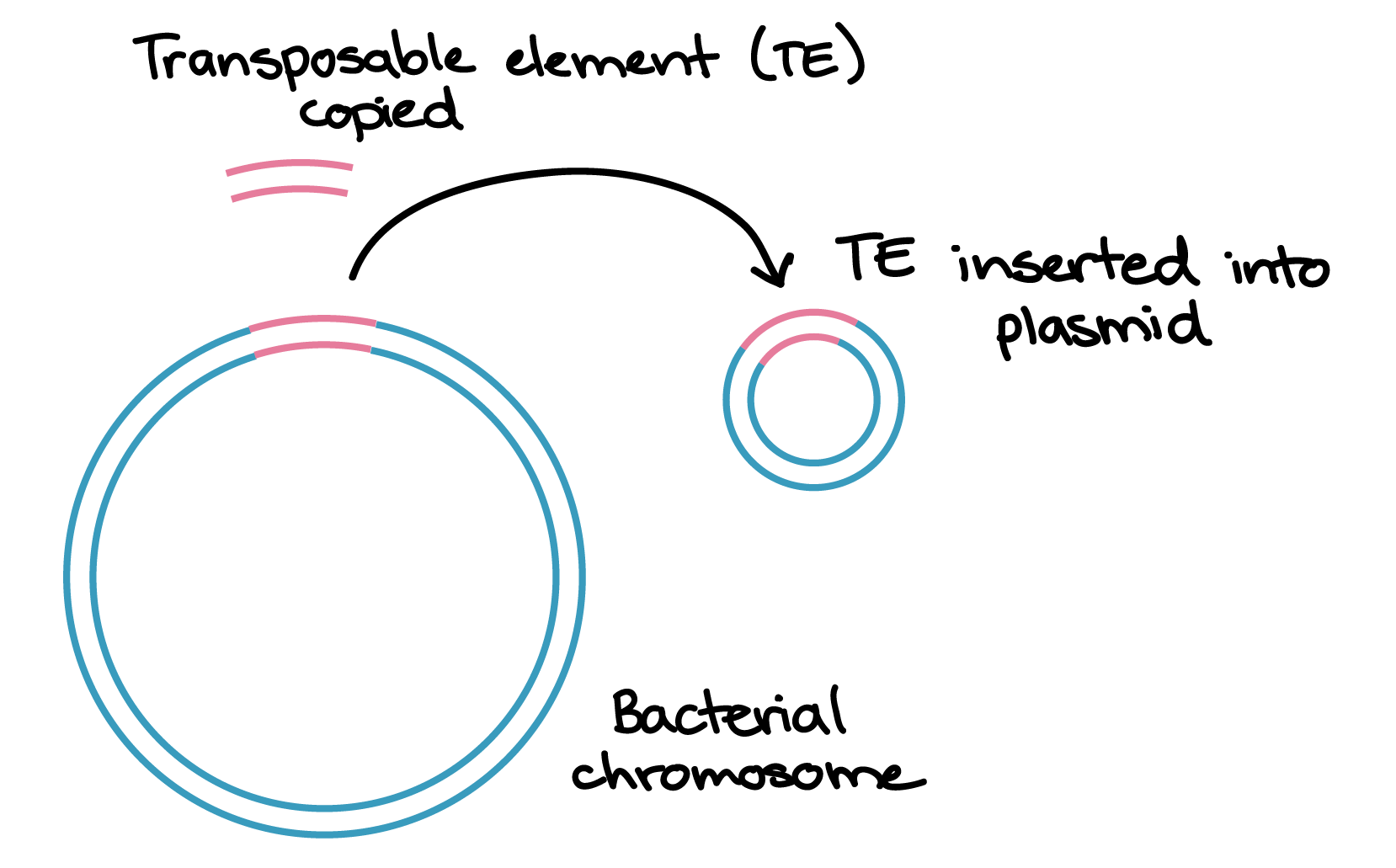 Briefly explain how sexual reproduction generates new allele combinations in offsprings