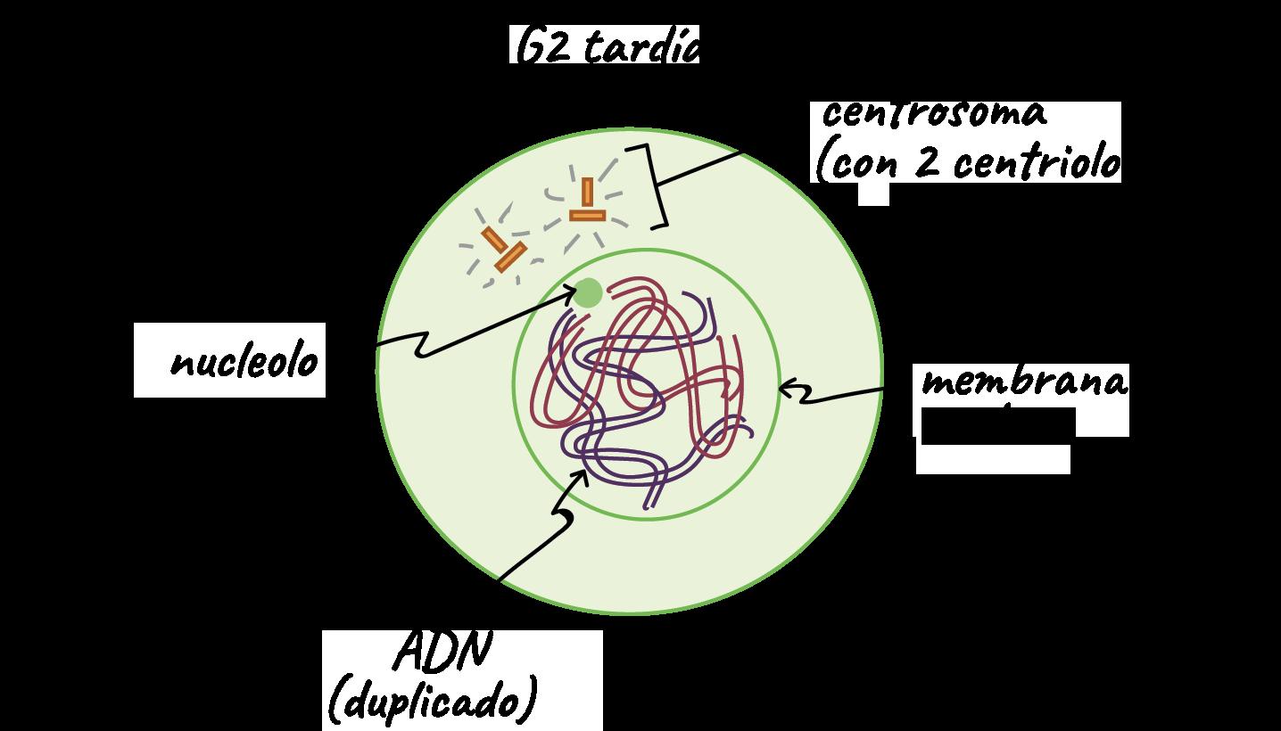 División celular | Biología | Ciencia | Khan Academy