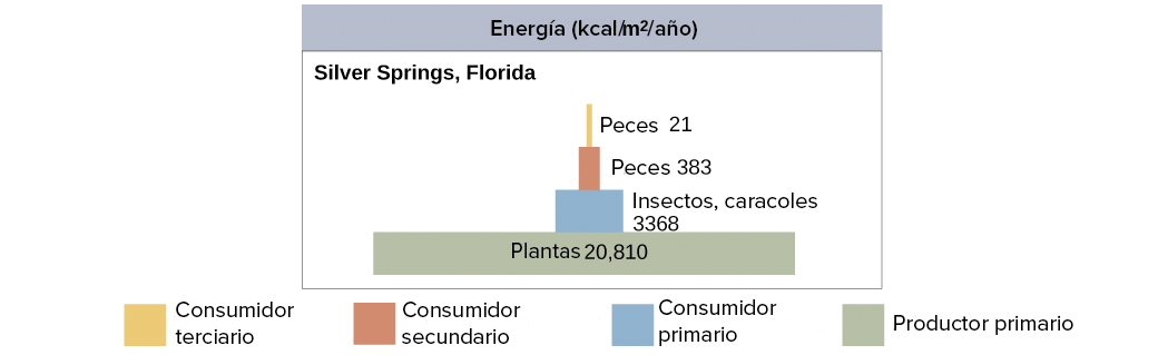 Flujo de energía y productividad primaria (artículo) | Khan Academy