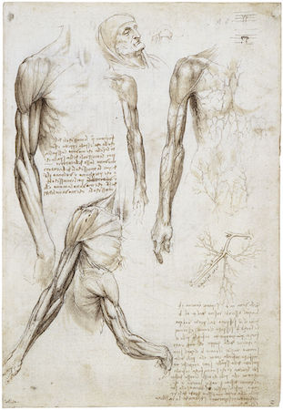 Leonardo da Vinci, Écorché (A Dead or Moribund Man in Bust Length), c. 1487, pen and ink over metalpoint on prepared paper (Royal Collection, London)