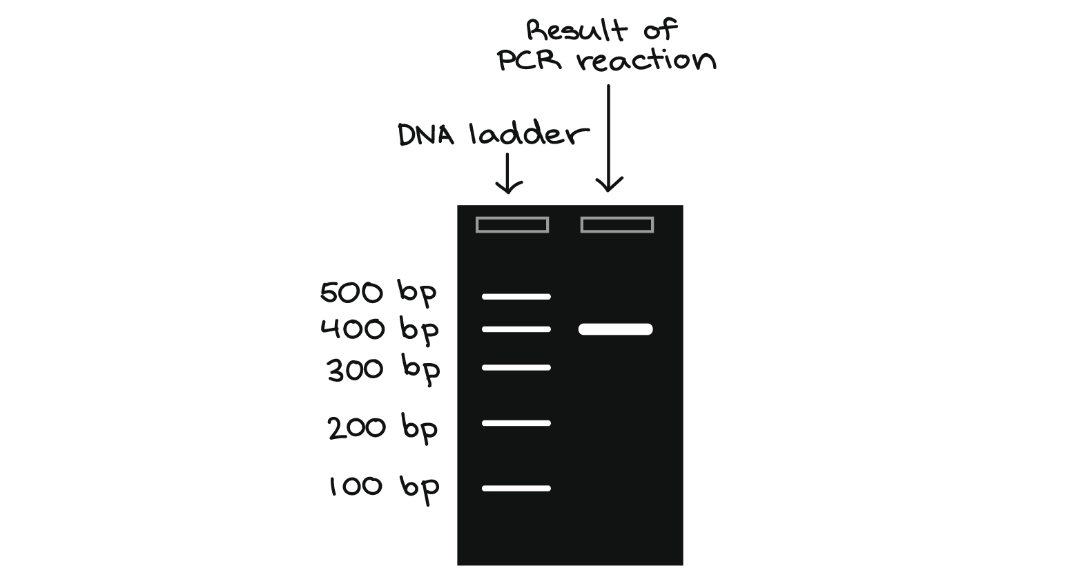 the polymerase chain reaction pcr
