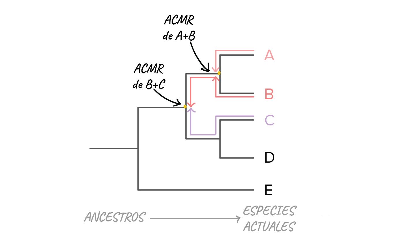 Árboles filogenéticos (artículo) | Khan Academy