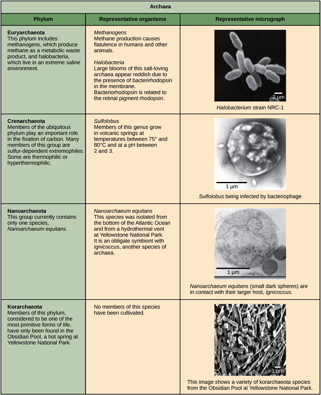 Prokaryote Classification And Diversity Article Khan Academy Knowledge Class Structure Of A Generalized Eukaryotic Cell