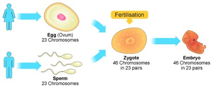 Asexual reproduction definition simple diffusion