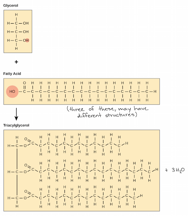 Lipids article Macromolecules – Organic Macromolecules Worksheet