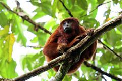 Tropical rainforest biomes (article) | Khan Academy